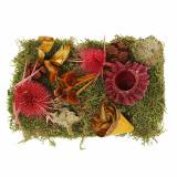 Dry floristry mix with cones and moss red 150g autumn decoration