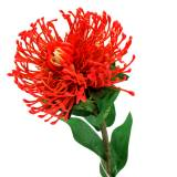 Protea Artificial Red 73cm