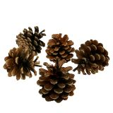 Black pine cones Nature 10kg