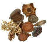 Exotic assortment with Strobus pinecone Nature 300g
