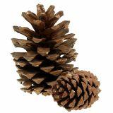 Pine cones mix big 14kg