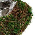 Plant heart vine, moss 32cm x 24cm H8cm